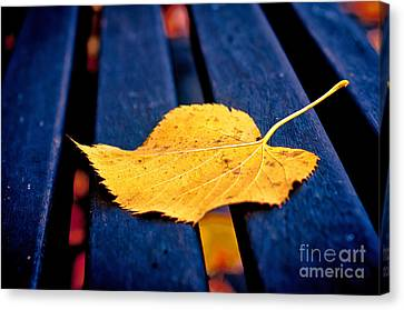 Yellow Leaf On Bench II Canvas Print by Silvia Ganora