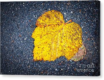 Yellow Leaf On Ground Canvas Print by Silvia Ganora