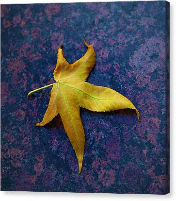 Yellow Leaf On Marble Canvas Print by David Davies