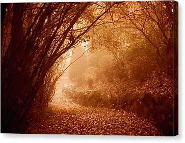 Yellow Leaf Road Canvas Print