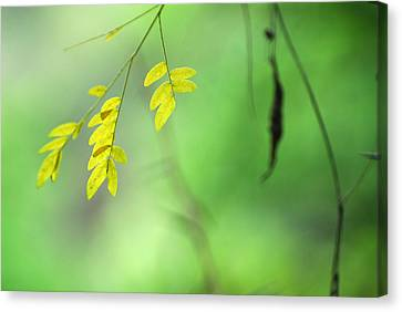 Yellow Leaves Canvas Print by Guido Montanes Castillo