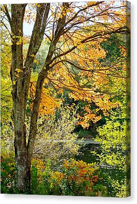 Canvas Print featuring the photograph Yellow Leaves by Janice Drew