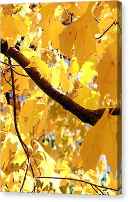 Yellow Leaves Canvas Print by Valentino Visentini