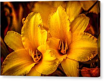 Yellow Lillies Canvas Print