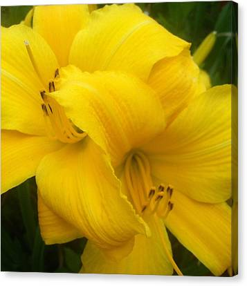 Yellow Lily Canvas Print by Saribelle Rodriguez