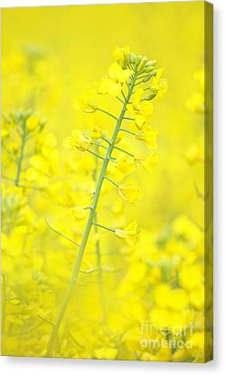 Yellow Makes Me Happy Canvas Print by Angela Doelling AD DESIGN Photo and PhotoArt