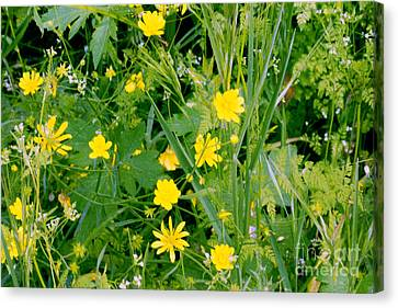 Canvas Print featuring the photograph Yellow Monkey Flowers by Gary Brandes
