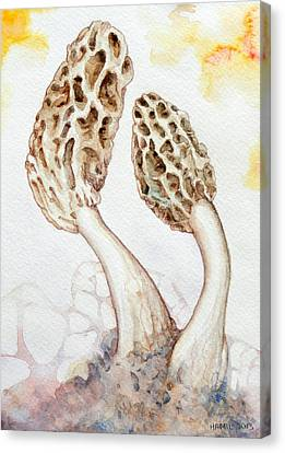 Yellow Morel Mushrooms Canvas Print by Alison Hamil