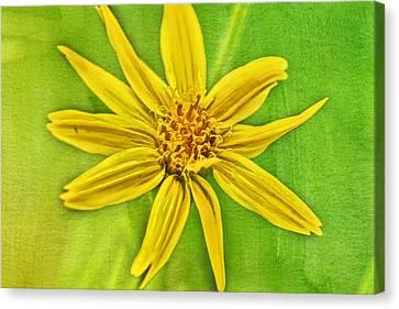 Yellow Mountain Bloom Canvas Print