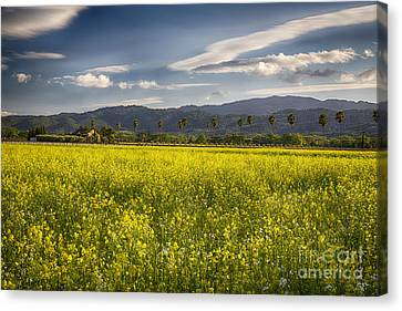 Wine Making Canvas Print - Yellow Mustard And Palm Trees In Napa Valley by George Oze