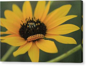 Canvas Print featuring the photograph Yellow On Yellow by Alicia Knust