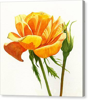 Yellow Orange Rose With Bud On White Canvas Print