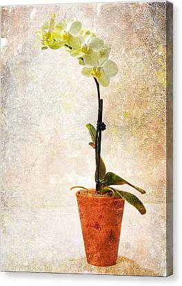 Canvas Print featuring the photograph Yellow Orchid by Patti Deters