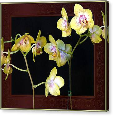 Yellow Orchids Canvas Print by Mindy Newman