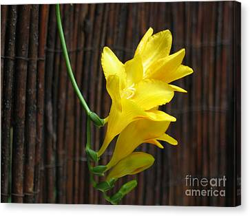Yellow Petals Canvas Print by HEVi FineArt