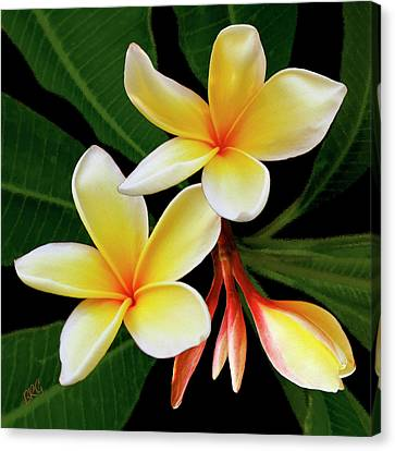 Canvas Print featuring the photograph Yellow Plumeria by Ben and Raisa Gertsberg