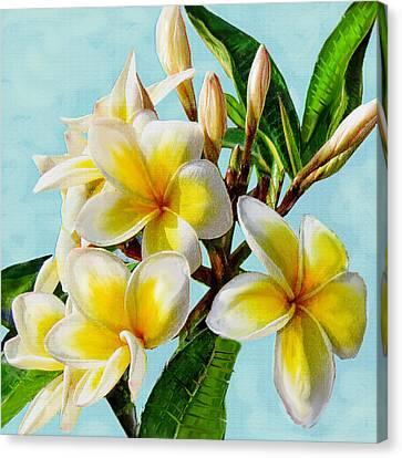 Yellow Plumeria Canvas Print by Jane Schnetlage