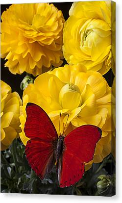 Yellow Ranunculus And Red Butterfly Canvas Print by Garry Gay