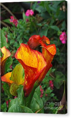 Canvas Print featuring the photograph Yellow Red Calla Lily by Eva Kaufman