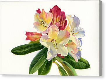 Yellow Rhododendron With White Background Canvas Print by Sharon Freeman
