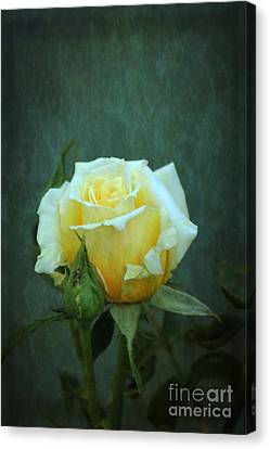 Canvas Print featuring the photograph Yellow Rose 2014 by Marjorie Imbeau