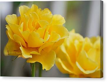 Canvas Print featuring the photograph Yellow Rose by Amee Cave
