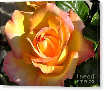 Canvas Print featuring the photograph Yellow Rose Bud by Debby Pueschel