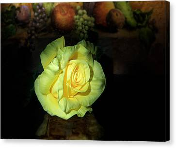 Yellow Rose Canvas Print by Cecil Fuselier