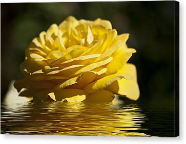Yellow Rose Flood Canvas Print by Steve Purnell