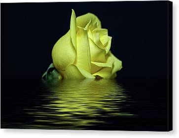 Yellow Rose II Canvas Print