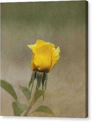 Yellow Rose Canvas Print by Kim Hojnacki