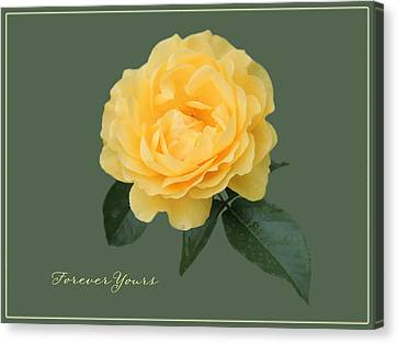 Yellow Rose Of Love Canvas Print by Teresa Schomig