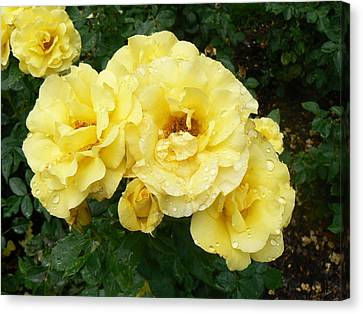Canvas Print featuring the photograph Yellow Rose Of Pa by Michael Porchik