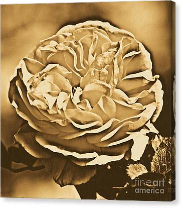 Yellow Rose Of Texas Floral Decor Square Format Rustic Digital Art Canvas Print by Shawn O'Brien