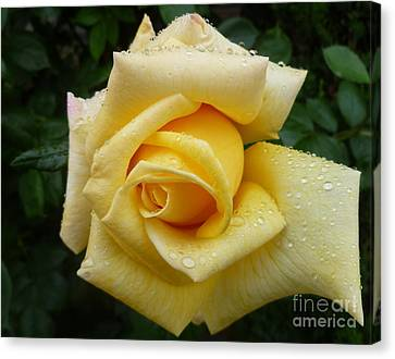 Yellow Rose Say Goodbye Canvas Print