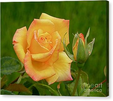 Canvas Print featuring the photograph Yellow Rose With Bud by Debby Pueschel