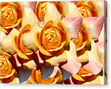 Yellow Roses Canvas Print by Diana Burlan