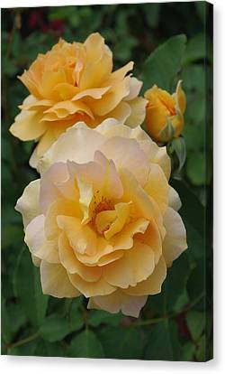 Canvas Print featuring the photograph Yellow Roses by Marilyn Wilson