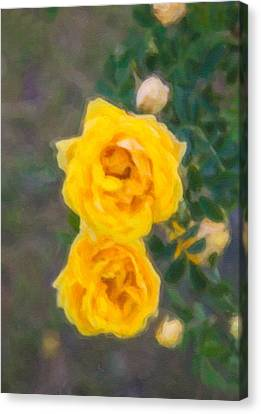 Yellow Roses On A Bush Canvas Print by Omaste Witkowski