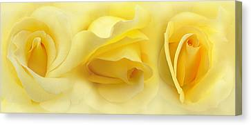 Yellow Roses Triptych Panel Canvas Print by Jennie Marie Schell