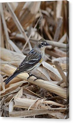 Canvas Print featuring the photograph Yellow-rumped Warbler by Debra Martz