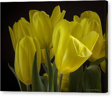 Canvas Print featuring the photograph Yellow Silk by Lucinda Walter