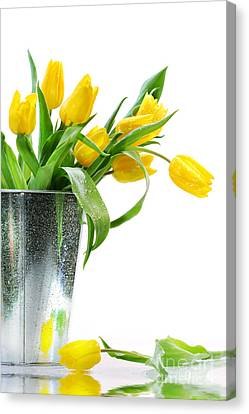 Yellow Spring Tulips Canvas Print by Sandra Cunningham