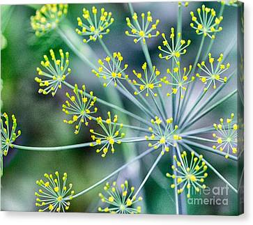 Canvas Print featuring the photograph Yellow Stars by JRP Photography