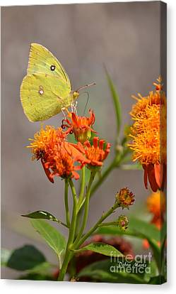 Canvas Print featuring the photograph Yellow Sulphur Butterfly by Debra Martz