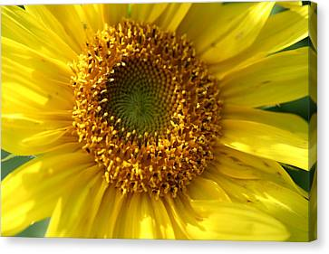 Yellow Sunshine Canvas Print by Neal Eslinger