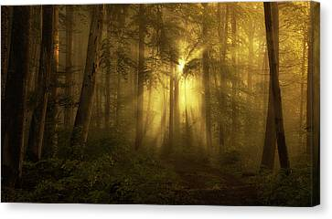 Yellow - The Bigger Picture Canvas Print