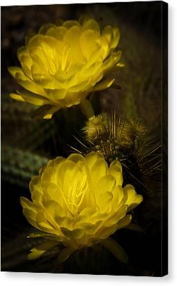 Yellow Torch Cactus  Canvas Print by Saija  Lehtonen