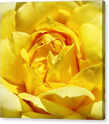 Yellow Tourmaline Rose Palm Springs Canvas Print by William Dey