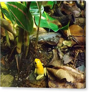 Yellow Tree Frog Canvas Print